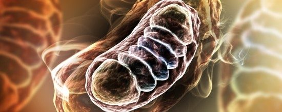 Mitochondriën 001